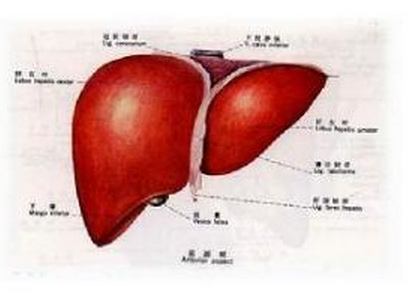 肝硬化的检查项目有哪些?